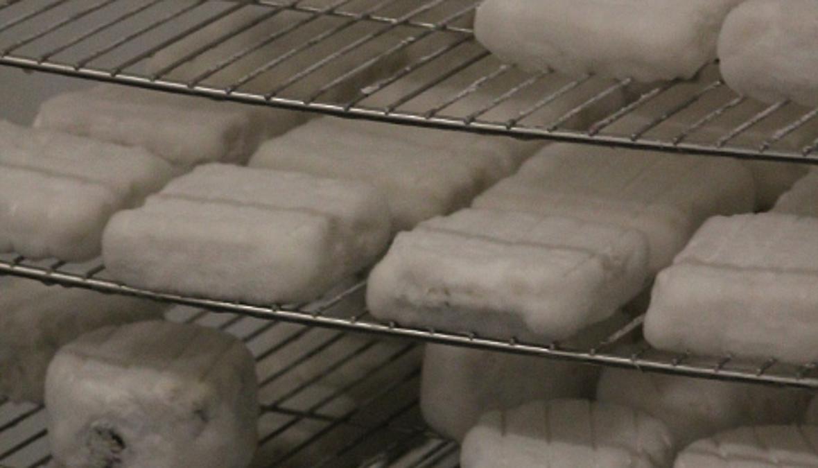 verschieden Ziegenweichkäse in der Reifekammer